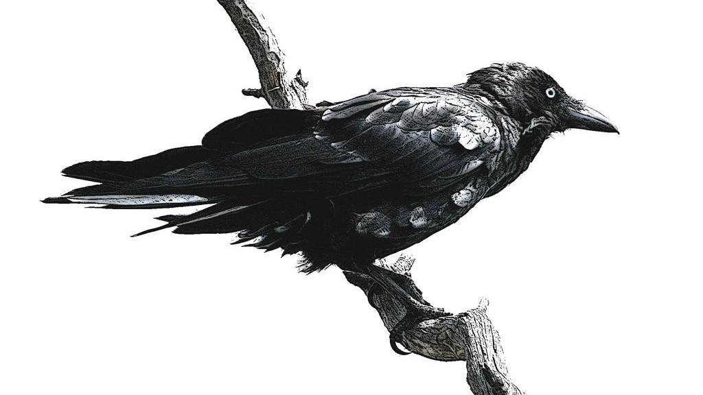 Fer - bird3